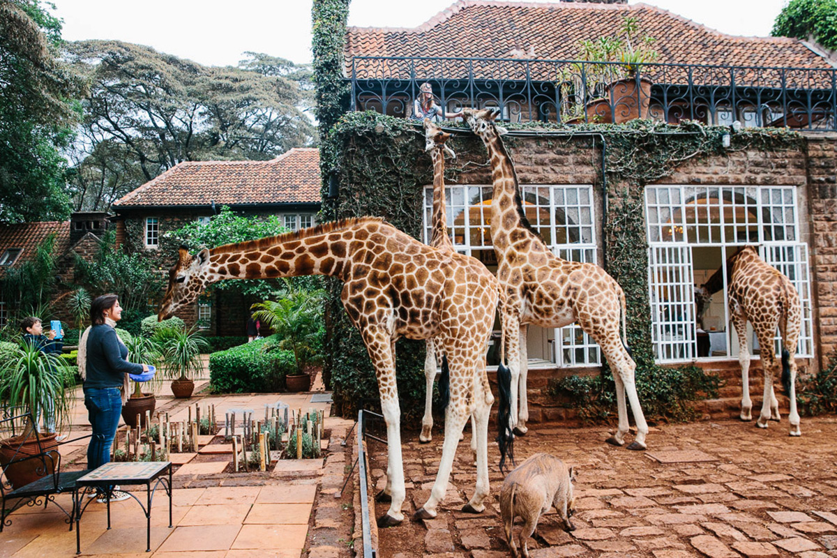 Giraffe Manor | A Guide to Kenya | Travel Insurance | Hippo.co.za