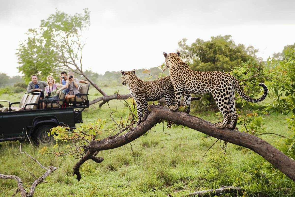 south africa as a tourist destination How can the answer be improved.