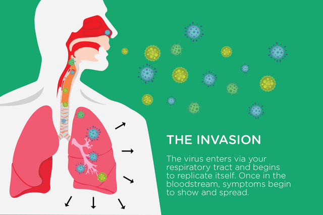 The Invasion | How the Common Cold Works | Hippo.co.za